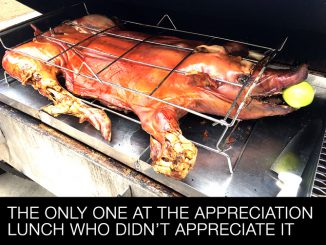 This Whole Pig Was the Only One at the Appreciation Lunch who Didn't Appreciate It.