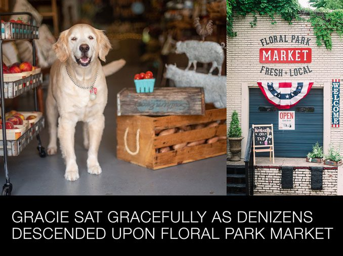 Gracie Sat Gracefully as Denizens Descended Upon Floral Park Market